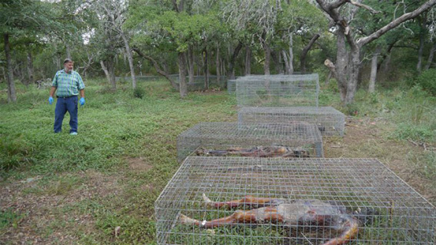 A body farm is a research facility where decomposition can be studied in a variety of settings