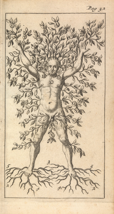 A man growing as a tree with branches, fruit and roots. From John Case and D.M. Londiensi, Compendium anatomicum nova methodo institutum, 1696. Source: Wellcome Image Collection