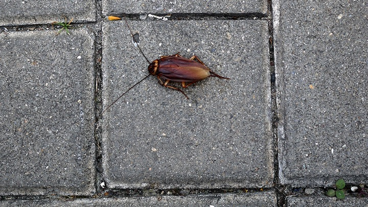 Wei Yuan < Brought a dead cockroach from HK to Chinese mainland> Performance 2012
