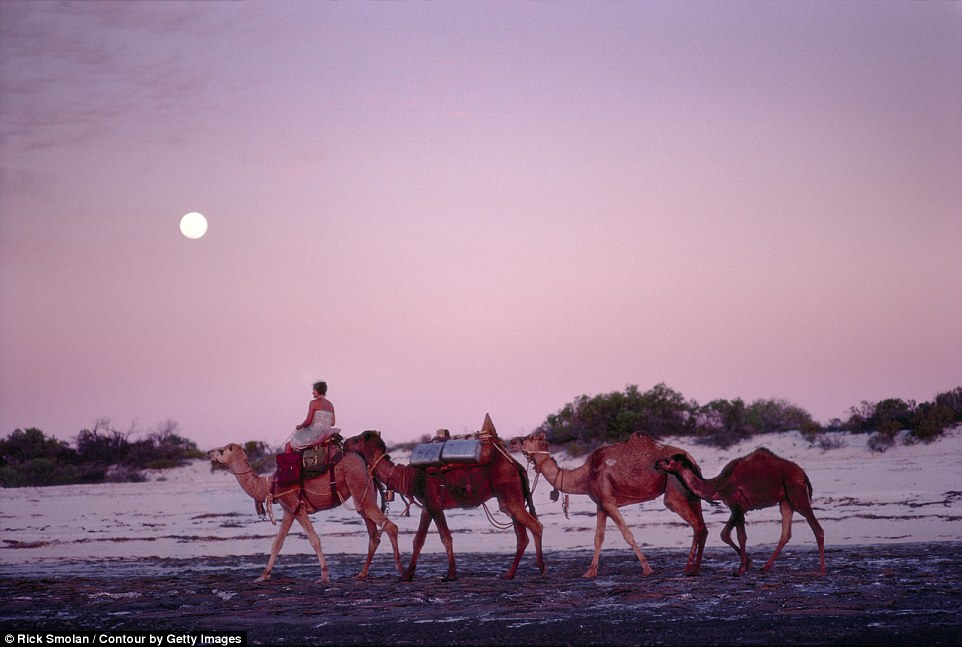 http://www.dailymail.co.uk/travel/travel_news/article-2727757/One-woman-four-camels-dog-Amazing-vintage-images-Seventies-woman-walked-1-700-miles-Australia.html